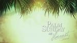 palm sudnay